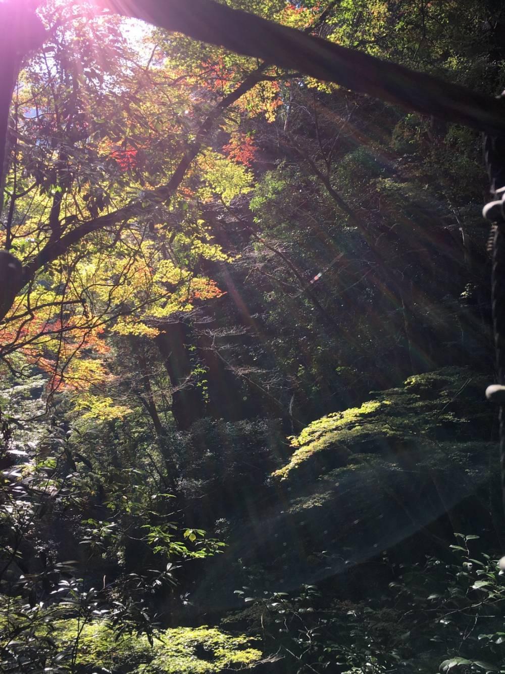 筏師の道の現在(R2年11月田戸~小松)