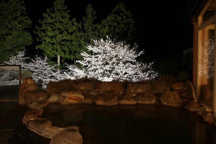 ライトアップされた夜桜は、とても美しく、温泉と共に心が休まります。