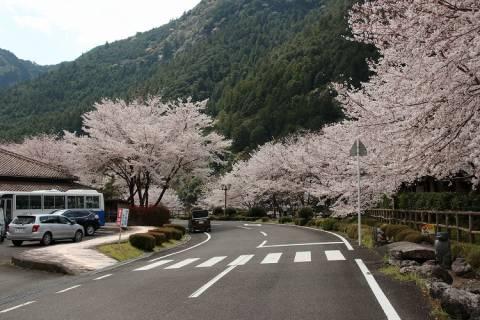おくとろ公園の桜(ドローン映像)